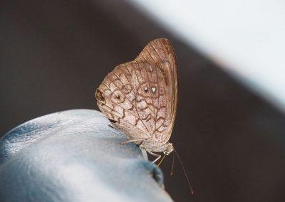 Schmetterling zu Besuch auf dem Boot