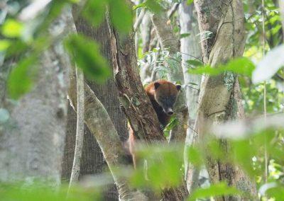 Ein kleiner Affe beobachtet uns aus dem Bäumen