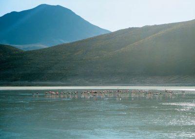 Umgeben von Flamingos.