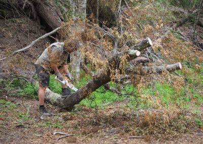 Der Baum muss weg! Horst sägt uns den Weg zum Lagerplatz frei.