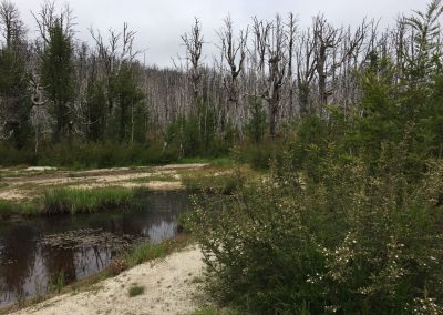 Gleich nach der Grenze erwartete uns ein riesiges Gebiet voll abgestorbener Bäume. Skurril!