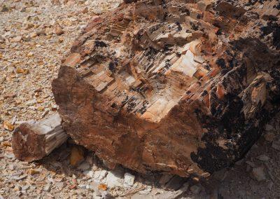 Sieht aus wie lebendiges Holz.