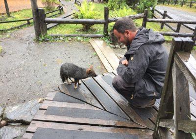 Hifi wird von einem chilenischen Fuchs begrüsst.