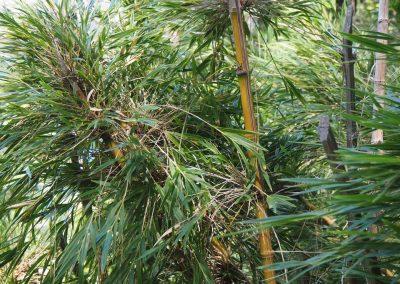 Hier wächst wieder sehr viel Bambus