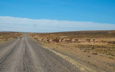 Die Bedeutung von Pampa