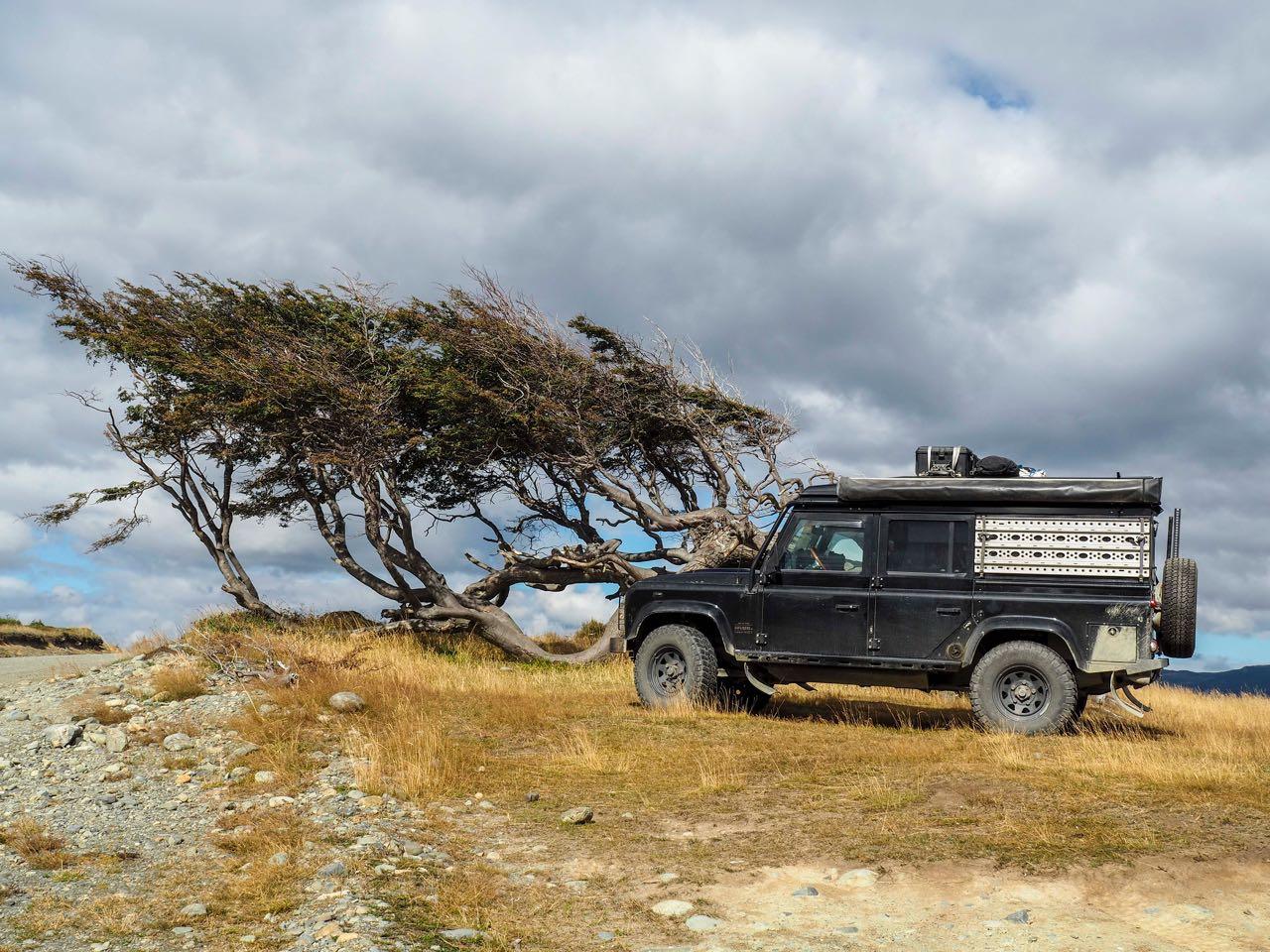Dieser Baum ist das Patagonische Wahrzeichen.