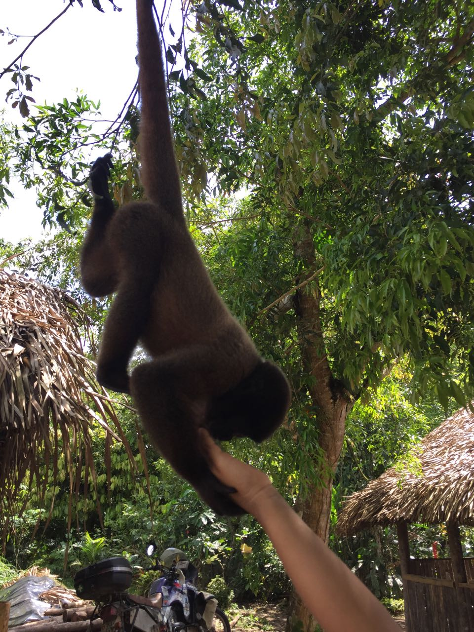 Und der kleine Hausaffe, der immer im Baum herumklettert und gerne gestreichelt wird.