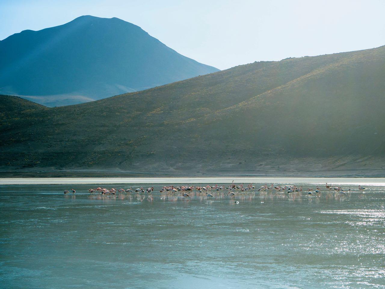 Am Morgen sind wir umgeben von Flamingos.