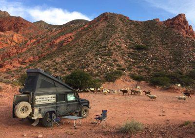 Eine Herde Ziegen besucht uns hier zwischen den roten Felsen.