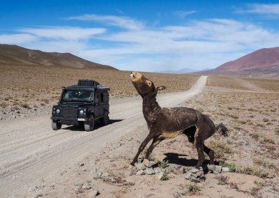 Uuups! Dieser konservierte Esel ist aber doch etwas mackaber! Wen genau soll der wohl abschrecken?
