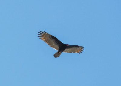 Nur die Kormorane schweben lautlos und ohne Flügelschlag über das Tal.