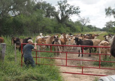 Die Kühe erwarten uns schon ganz gespannt.