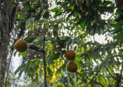 Etwas Übung braucht es, doch schlussendlich kriegten wir unsere Orangen.