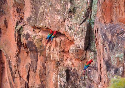 Im «Boca da Araras» leben viele rote Aras.