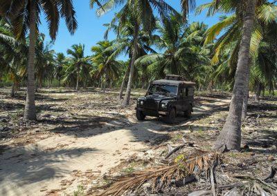 Mitten durch Palmenwälder geht's.