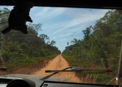 Manchmal führt uns der Pfad mitten durch den Dschungel.