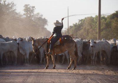 Eine Rinderherde versperrt die Strasse und wird von den Gauchos zusammengetrieben.