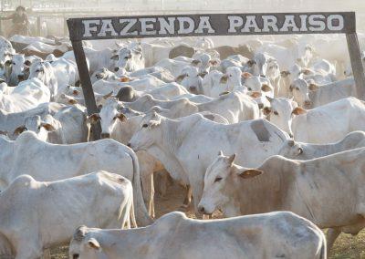 Auf der Fazenda Paraiso ist was los.