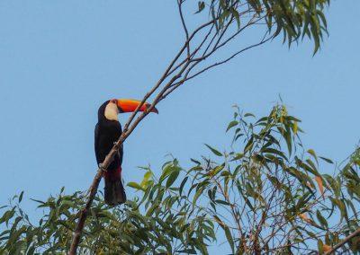 Ein Tucan beobachtet das Geschehen aus der Höhe.