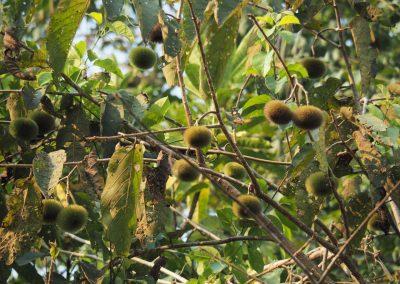 Lustige Früchte hängen da.