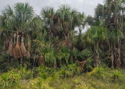 Und rechts und links dichtes Buschwerk und Palmen.