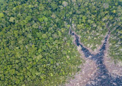 Im Wasser sterben die Bäume ab…