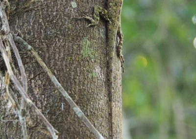 Was huscht denn da den Baum hoch?