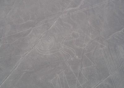 Ein Labyrinth-Kringelschwanz-Affe.