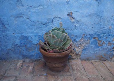 Alle Wände sind entweder blau…