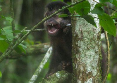 Auch dieser kleine Strolch hat sich einen Lolli ergattert, was für seine Zähne bestimmt nicht das beste ist…!