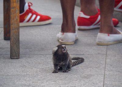 Dieser kleine Kerl ist auf der Suche nach was Essbarem.