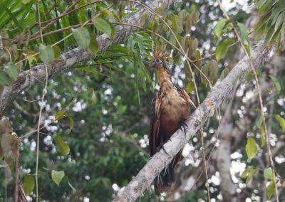 Von diesen Vögeln haben wir ganz viele gesehen und vor allem gehört.