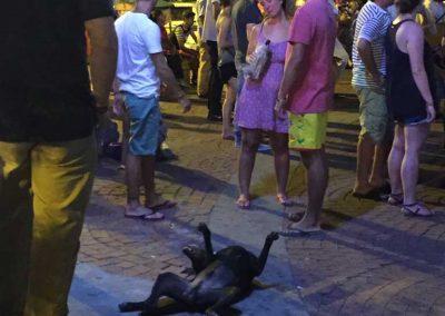 Nein, der Hund ist nicht tot! Nur faul am herumliegen.