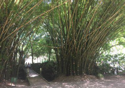 Hohe Bambushaine wachsen hier.