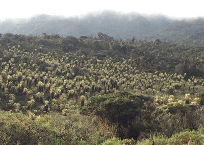 Ein Feld voller kleiner Palmen. Die haben wir sonst noch nie gesehen.