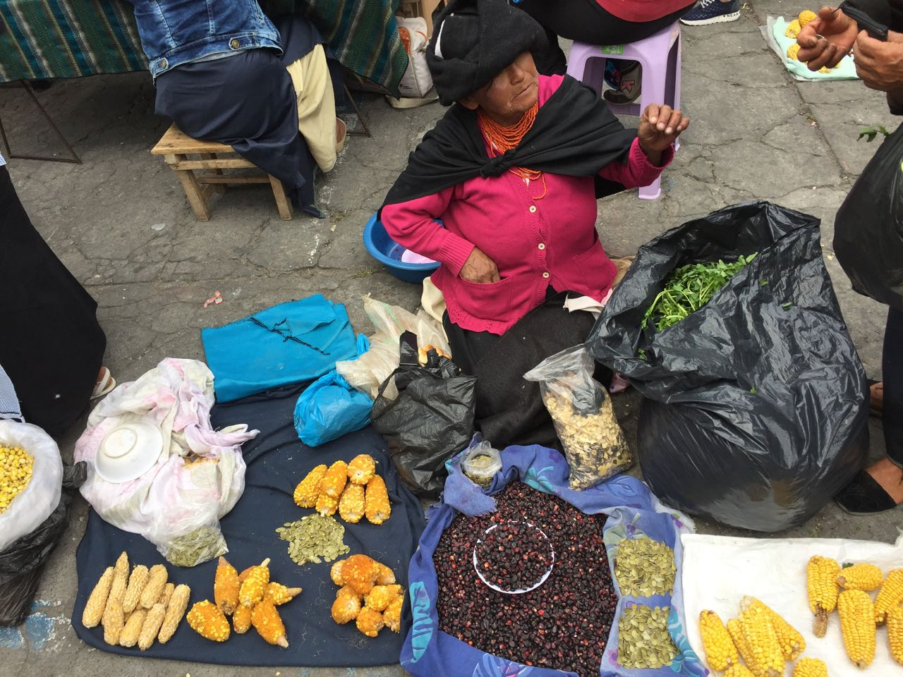 Viele verschiedene Mais-Sorten