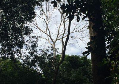Eine Baumkorne hoch oben