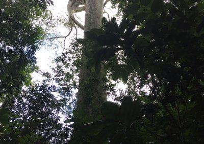 Dieser Baum ragt weit hinaus.