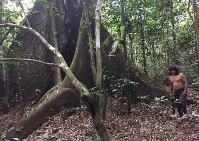 Unten am Fuss des Baumes…