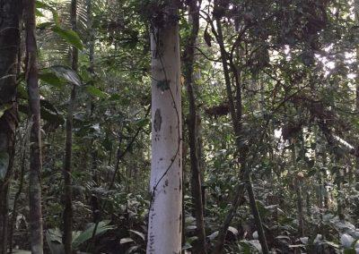 Dieser Baumstamm sieht aus wie weiss angemalt. Ist er aber nicht.