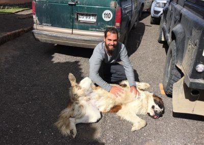 David hat einen neuen Freund gefunden – ein echter Bernhardinerhund.