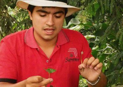 Die kleinen Pflanzen haben verschiedene Wachstumsstadien.