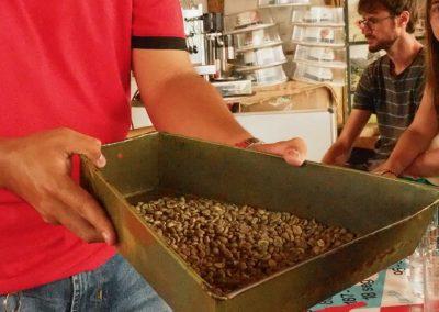 Die grünen Kaffeebohnen vor der Röstung.