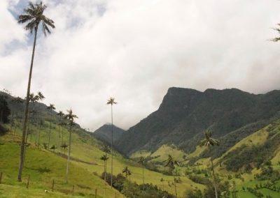 Im «Valle de Cocoa». Diese Palmenart gibt es nur hier.