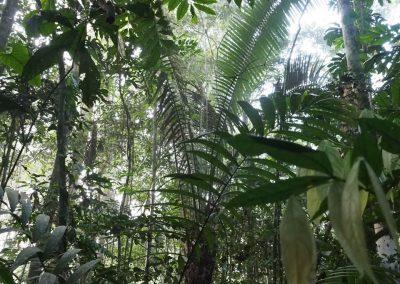 Regenwald pur!
