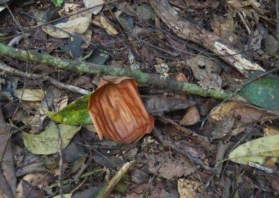 Schillernde, bronzefarbene Blütenblätter