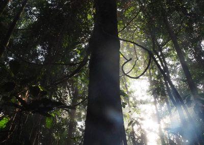 Wenn das Licht durch die Bäume scheint, wird's richtig Märchenhaft.