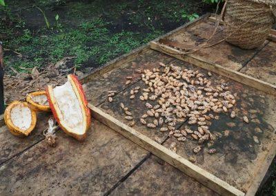 Und so sehen die fermentierten Bohnen aus.