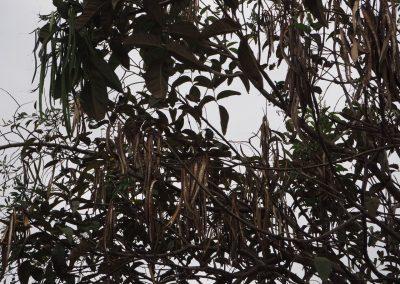 Wer findet den Kolibri?