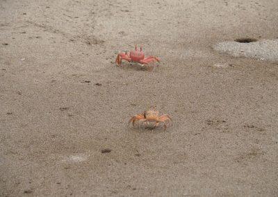 Auch hier hat's Krebse am Strand.